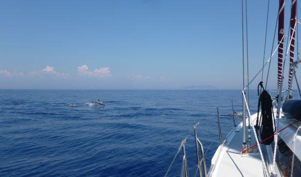 Ännu mera delfiner