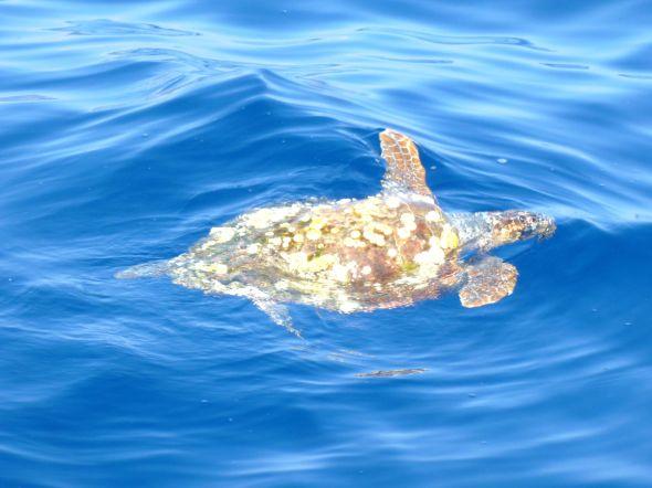 ... och en sköldpadda