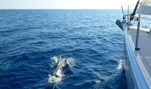 Mera delfiner