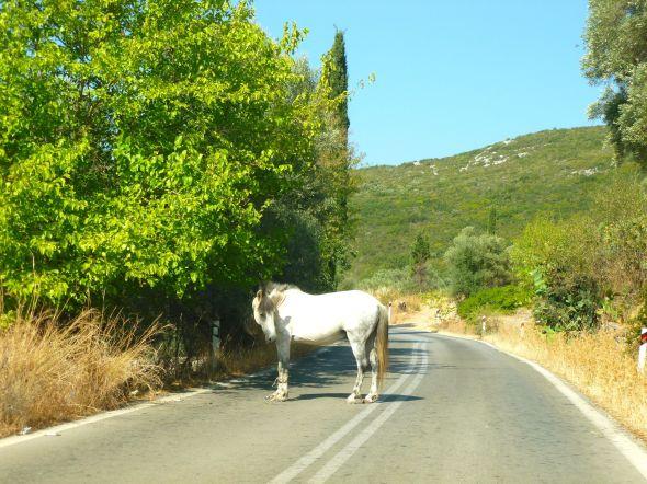 Häst på vägen