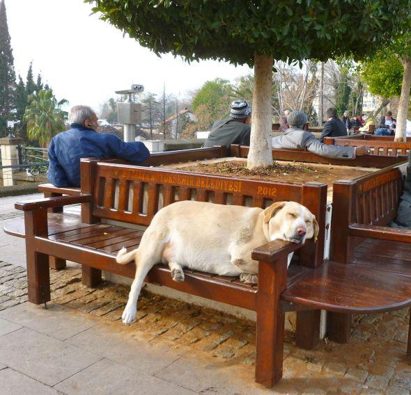 Civiliserat hundliv i Antalya