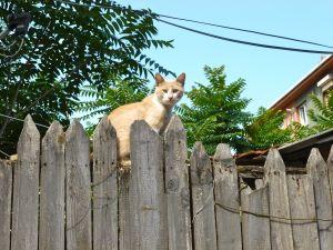 En av otaliga katter i Fatih